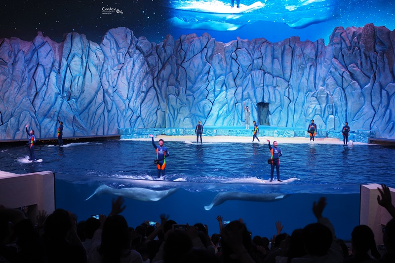 【長隆海洋王國】必看秀清單:馬戲劇場,海洋保衛戰,白鯨劇場,海洋夜光大巡遊!