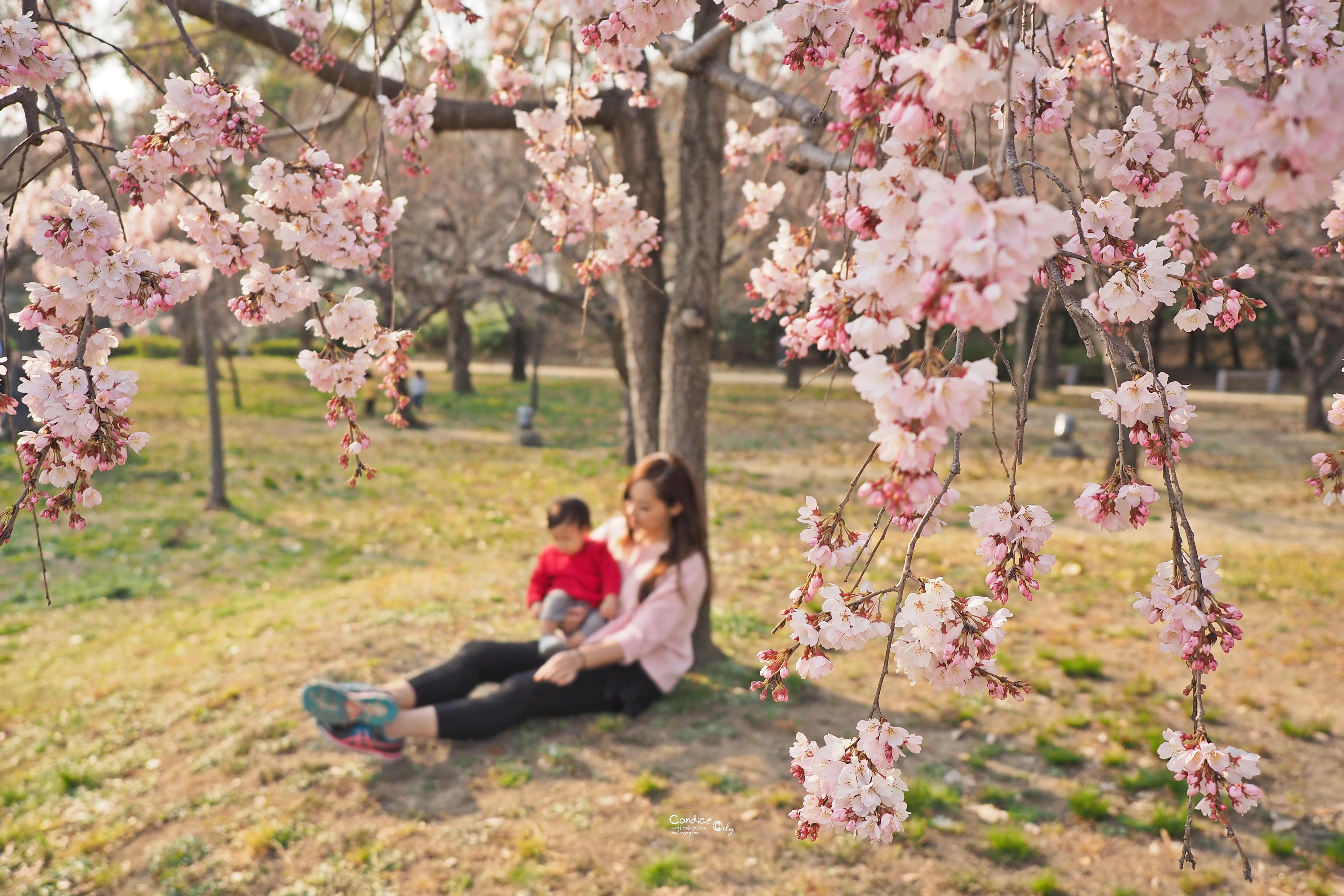 大阪景點》西之丸庭園 賞櫻景點 日本人野餐聖地 @陳小沁の吃喝玩樂