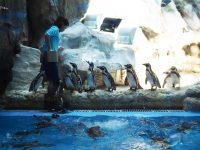 企鵝酒店|跟企鵝吃早餐,超夢幻自助餐!長隆海洋王國住宿推薦! @陳小沁の吃喝玩樂