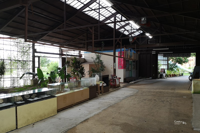 Cafe Curcuma薑黃花南洋咖哩|超威海景餐廳,又有美食可吃!