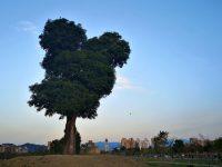 最新台中景點IG打卡夯地:萬坪公園米奇樹、台中地標英文!愛拍網美必拍! @陳小沁の吃喝玩樂