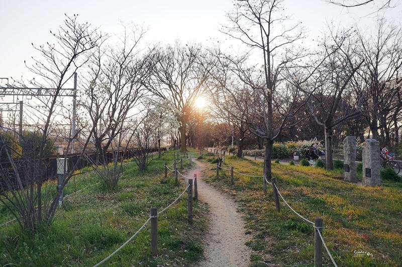【京都賞櫻】賞櫻景點推薦:梅小路公園櫻花,京都人賞櫻野餐聖地!