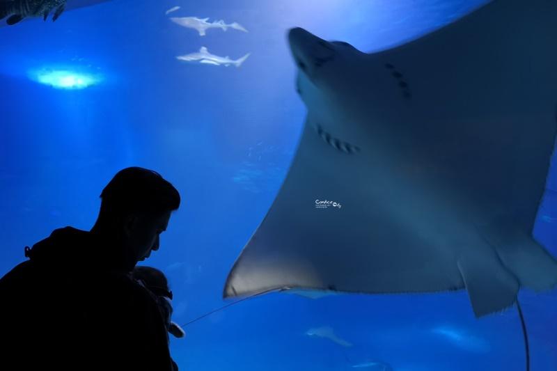大阪海遊館|超好玩的海遊館!看海獅海豹海豚超大鯨鯊療癒!親子行程必訪!