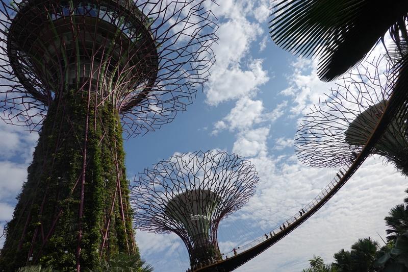 Supertree,擎天樹/超級樹/空中走廊/超級樹燈光秀|一次遊玩必看全攻略!