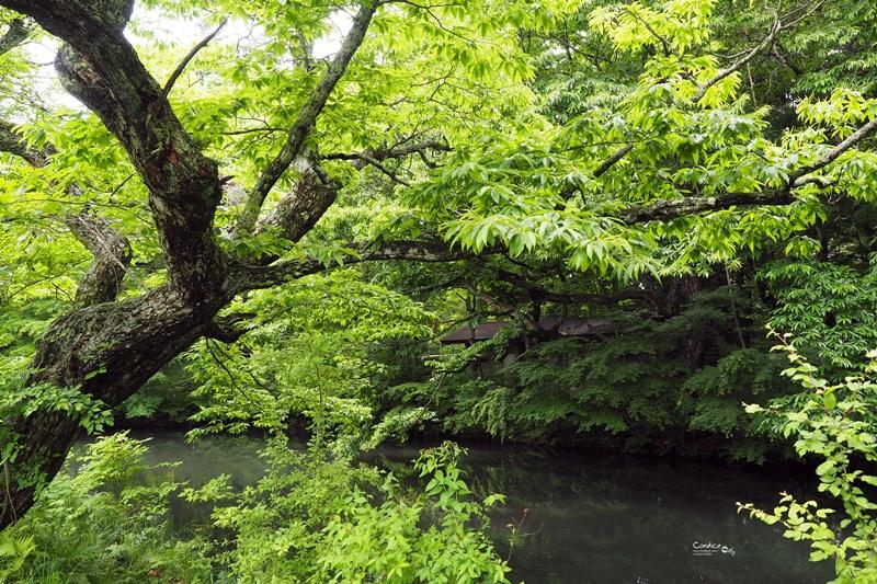 【輕井澤景點】雲場池,腳踏車交通方便,美美夏天避暑聖地!