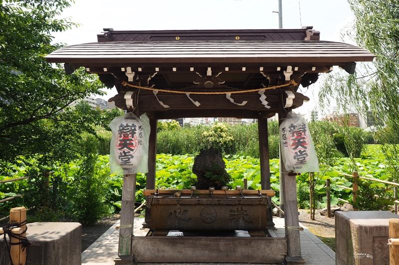 【東京景點】不忍池荷花池,上野恩賜公園,上野景點必訪!