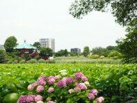 【東京景點】不忍池荷花池,上野恩賜公園,上野景點必訪! @陳小沁の吃喝玩樂