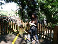 新加坡動物園|跟猩猩一起吃動物園早餐,餵長頸鹿超棒體驗,新加坡親子景點必訪! @陳小沁の吃喝玩樂