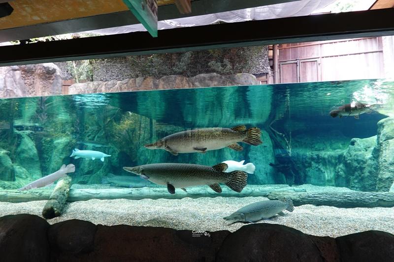 新加坡河川生態園|超好玩亞馬遜河川體驗,遊覽船小孩超愛的新加坡親子景點