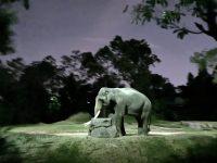 新加坡夜間野生動物園|全世界第一座晚上開的動物園!搭乘遊園車看動物超有趣! @陳小沁の吃喝玩樂