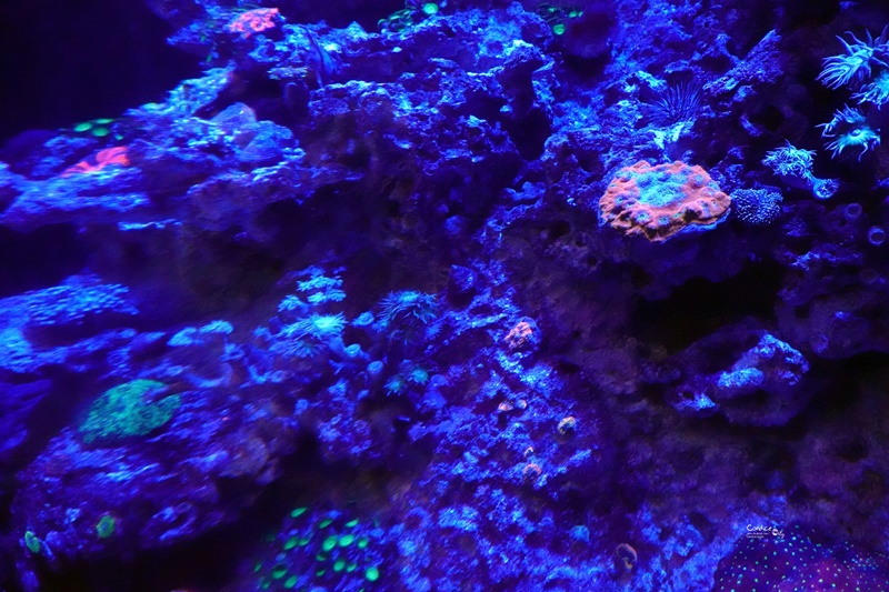 SEA海洋館|超多大型水族箱,鯊魚是亮點!超美,聖淘沙必訪景點!