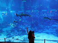 SEA海洋館|超多大型水族箱,鯨鯊鯊魚是亮點!超美,聖淘沙必訪景點! @陳小沁の吃喝玩樂