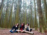 思連伊林蔭道|網美必拍景點,濟州島版忘憂森林!超好拍(濟州島景點) @陳小沁の吃喝玩樂
