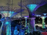 OCBC SKYWAY 必去超級樹空中走廊,在上面看超級樹燈光秀超漂亮! @陳小沁の吃喝玩樂