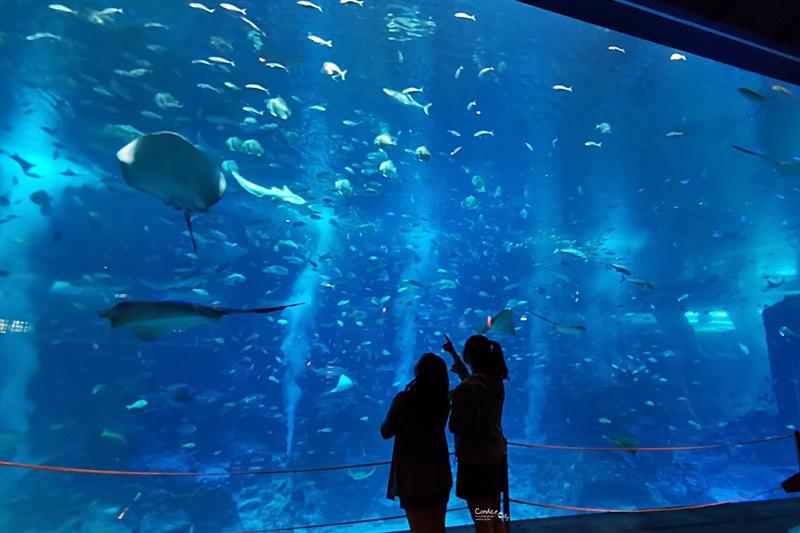S.E.A.海洋館|一開門人最少!必拍超大魟魚+鯊魚海底隧道超療癒!