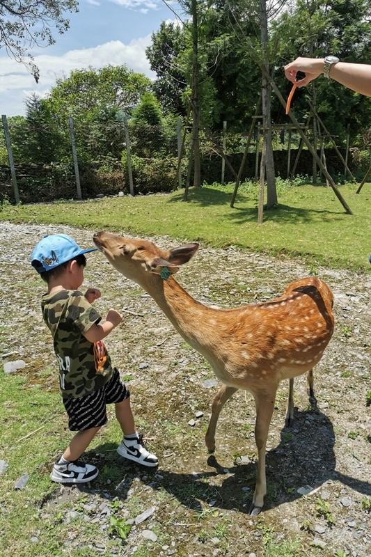 斑比山丘|新宜蘭景點,不用飛奈良看梅花鹿囉!超可愛的小鹿斑比!