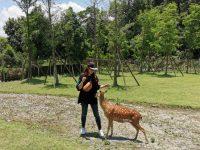 斑比山丘|新宜蘭景點,不用飛奈良看梅花鹿囉!超可愛的小鹿斑比! @陳小沁の吃喝玩樂