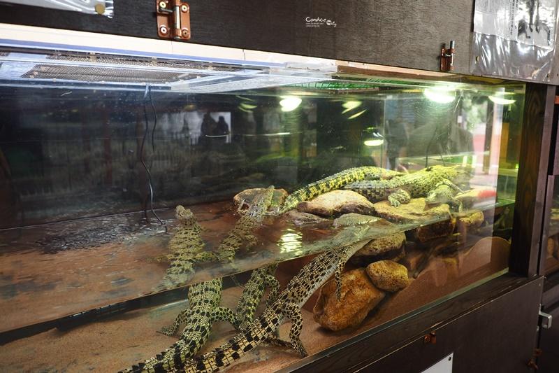 別府溫泉地獄-鬼山地獄|地獄滿滿都是鱷魚!活生生的鱷魚地獄!