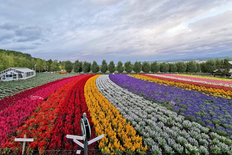 北海道富田農場|超美彩色花海!薰衣草最有名!富良野賞花景點(交通Mapcode) @陳小沁の吃喝玩樂