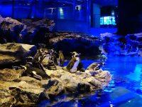 墨田水族館|海龜水母寶寶必看!悠閒水族館東京水族館必訪! @陳小沁の吃喝玩樂