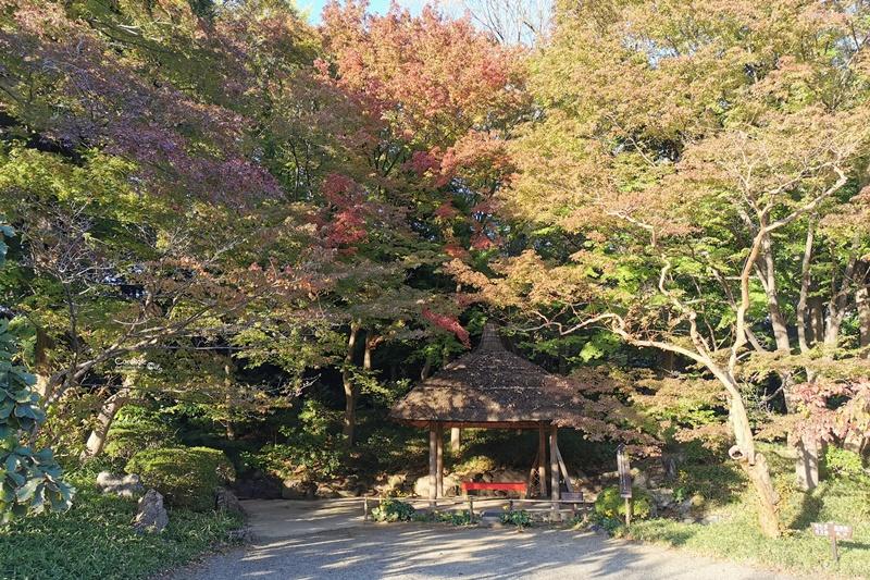 小石川後樂園|超美東京楓葉景點推薦!東京賞楓必去!中國風日式庭園!
