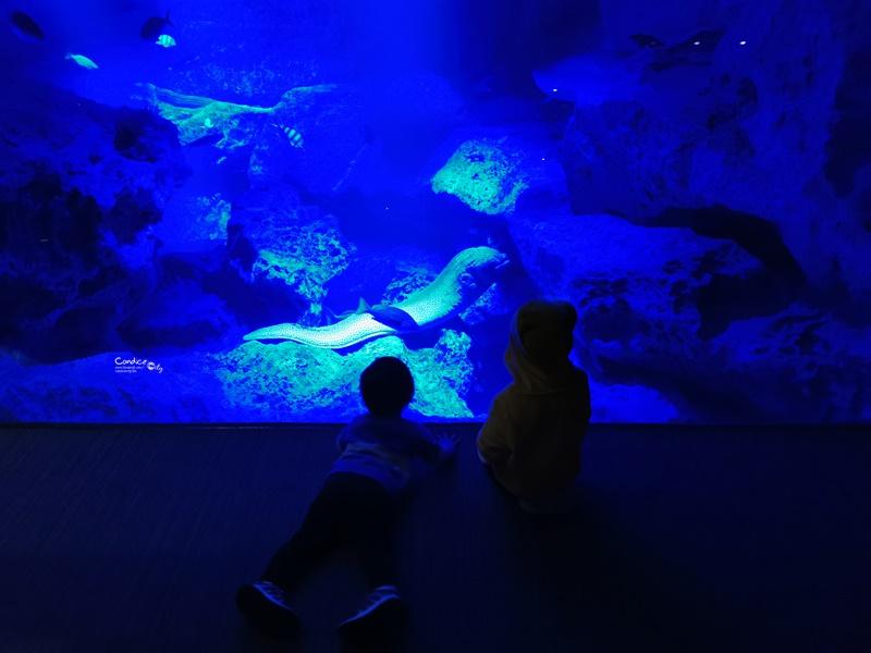 墨田水族館|海龜水母寶寶必看!悠閒水族館東京水族館必訪!
