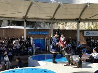 陽光水族館|池袋水族館!池袋太陽城頂樓的水族館!還有室外企鵝池,動物區! @陳小沁の吃喝玩樂