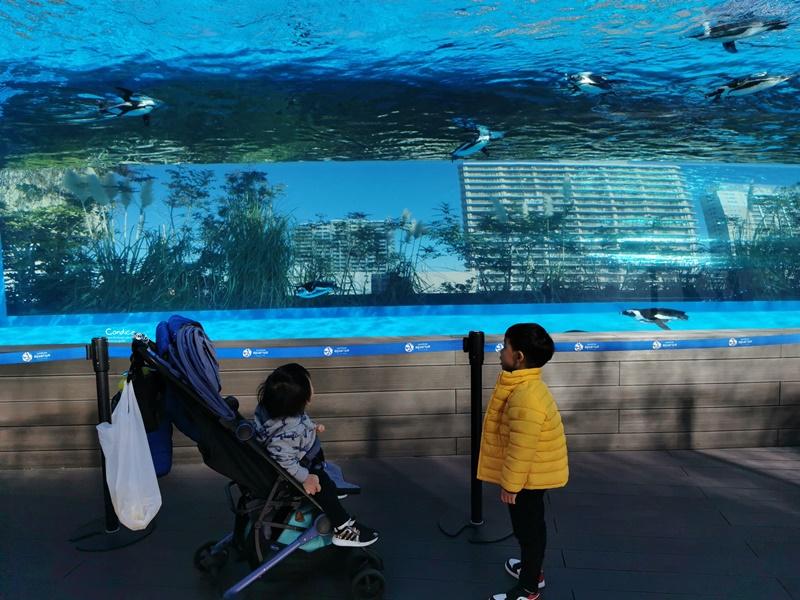 陽光水族館|池袋水族館!池袋太陽城頂樓的水族館!還有室外企鵝池,動物區!