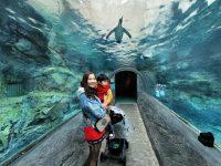 旭山動物園|超炫企鵝隧道,北極熊超可愛!超推薦北海道旭川景點! @陳小沁の吃喝玩樂