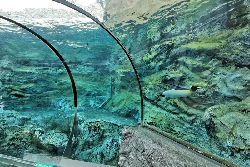 旭山動物園|超炫企鵝隧道,北極熊超可愛!超推薦北海道旭川景點!