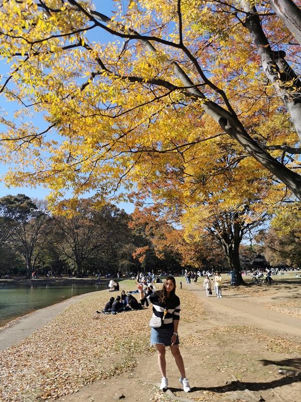 代代木公園|東京賞楓景點!東京野餐NO1景點!