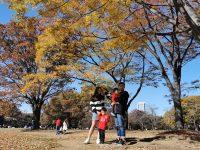 代代木公園|東京賞楓景點!東京野餐NO1景點! @陳小沁の吃喝玩樂
