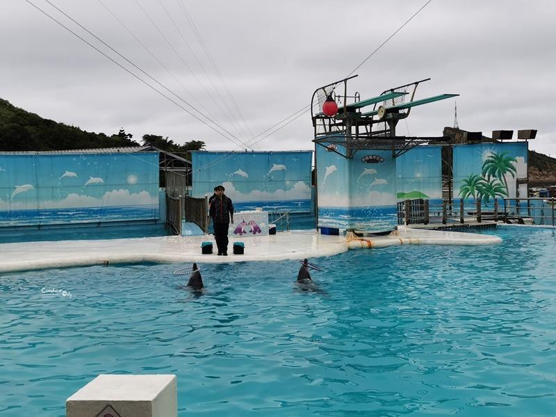 野柳海洋世界|超威海洋劇場!1場60分鐘,認識海獅,海豚+超精彩跳水表演!