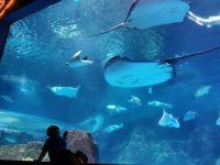 花蓮遠雄海洋公園|超好玩一日遊!怎麼玩攻略,表演時程表分享. @陳小沁の吃喝玩樂
