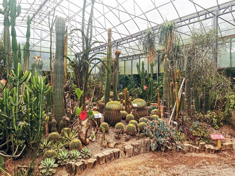 綠世界生態農場|小孩超愛的新竹親子景點!超多動植物可逛一天!