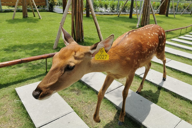 張美阿嬤農場|換和服餵梅花鹿,還有鳥居神社超有FU!宜蘭版小奈良!
