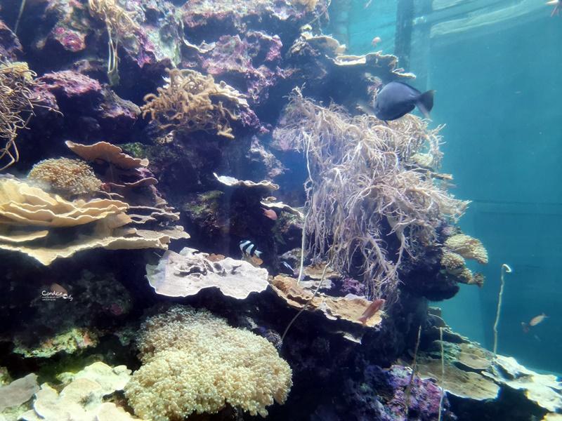 國立海洋生物博物館|不輸任何國家的超讚屏東海生館(網路門票便宜!)