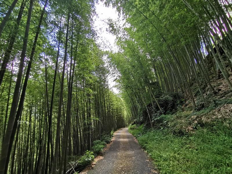 大鞍竹海‧孟宗竹蔭隧道|2公里的竹林秘境,私房南投景點!