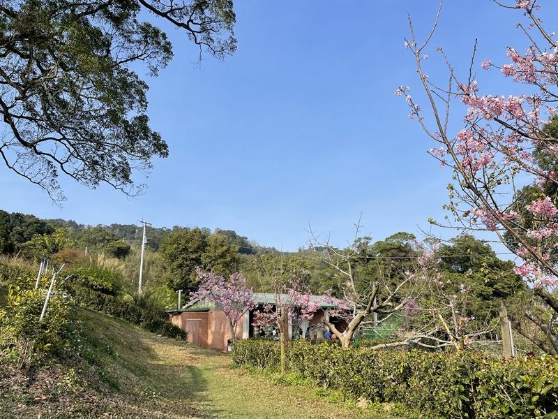 悠活憶境景觀露營區|營主自營草莓園,還有豐香草莓可採!10帳包場小營區!