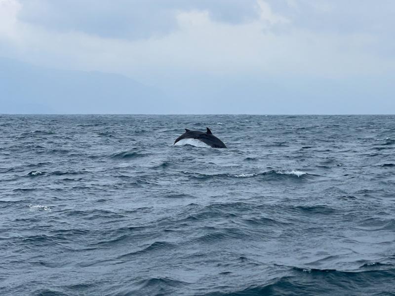 龜山島登島‧賞鯨豚‧繞島|超幸運的宜蘭賞鯨豚之旅!龜山島登島開放囉!